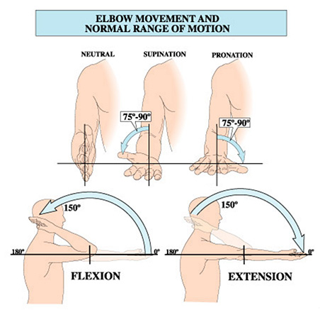 Elbow Movement and Normal Range of Motion