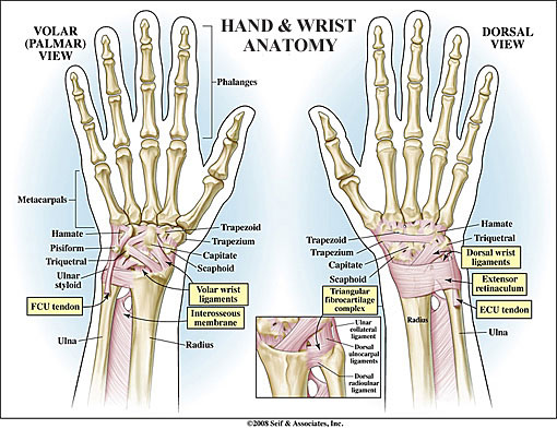 Wrist Anatomy New York Ny Handsport Surgery Institute